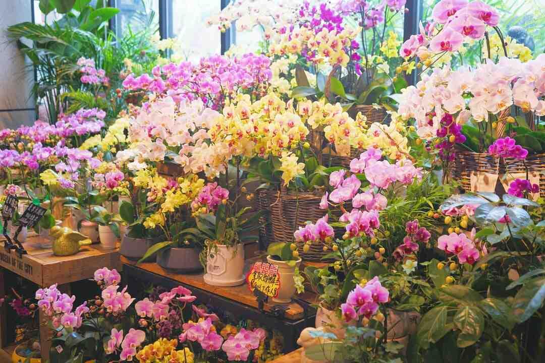 Comment ouvrir un magasin de fleurs